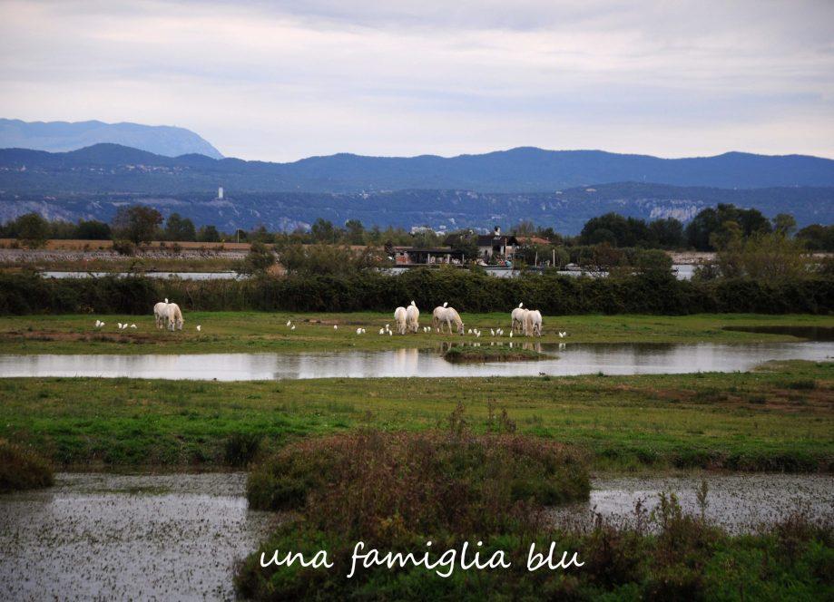 isola della cona con i bambini - cavalli camargue
