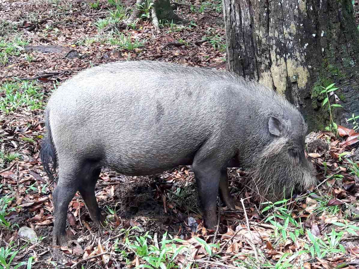 What is the wildlife in Bako National Park, Sarawak?
