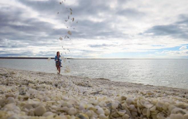 Shelly Beach à Shark Bay
