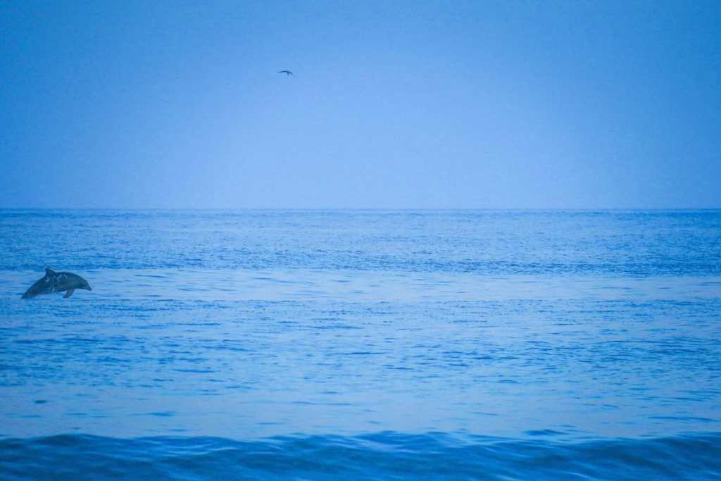 Dauphin qui saute à Stradbroke Island