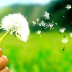 Curare allergie in modo naturale