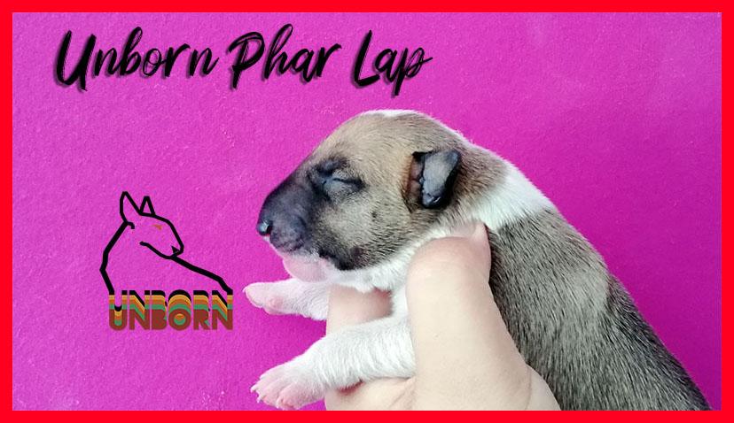 Unborn_Phar_Lap 3 giorni