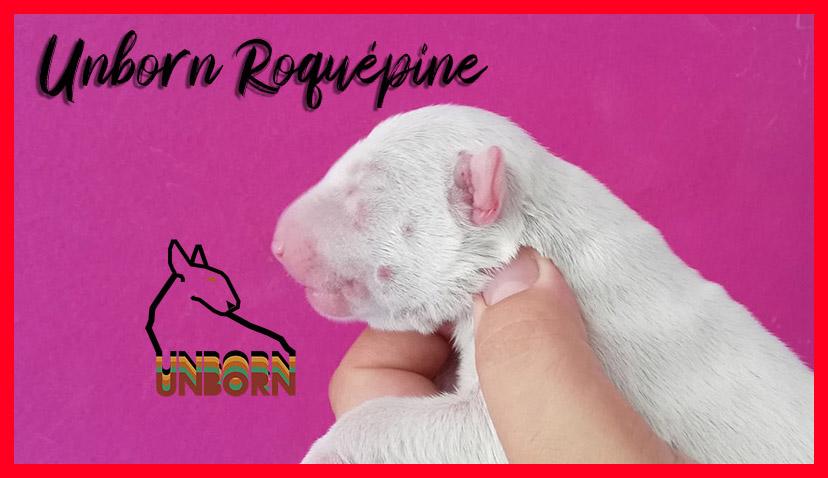 Unborn_Roquépine