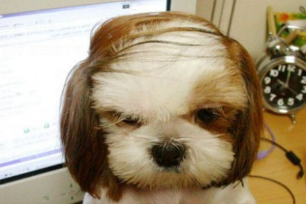 Combover-puppy