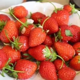fraises vrac