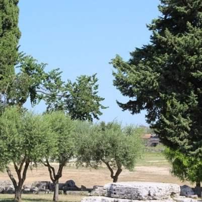 vue Paestum