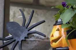 Araignee et photophore citrouille