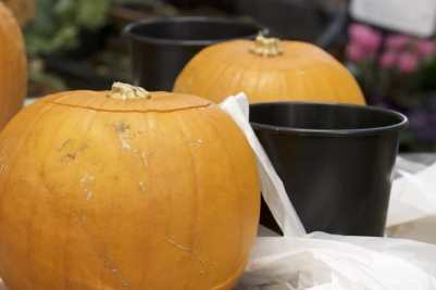Une citrouille pour halloweenuille pour halloween'Halloween