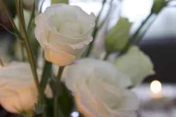 Lisianthus blancs