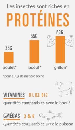 Les insectes sont pleins de protéines!