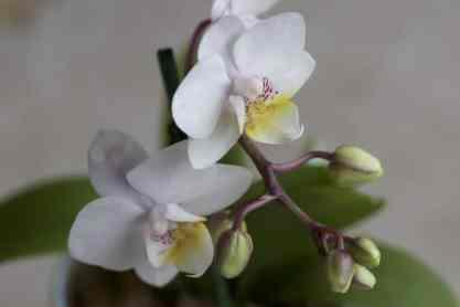 Jarre Yankee candle avec mini orchidée