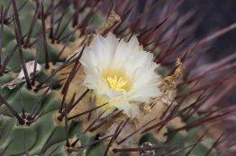 Jardin des cactus