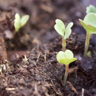 semis de printemps