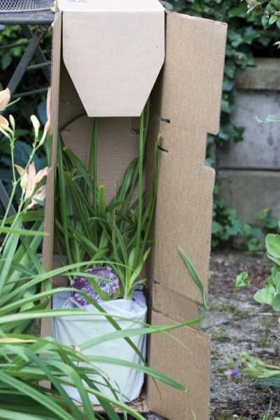 Agapanthe Twister Globe Planter