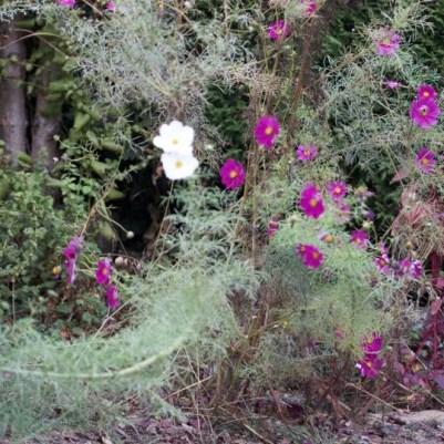 Bien nettoyer le jardin avant de planter les bulbes