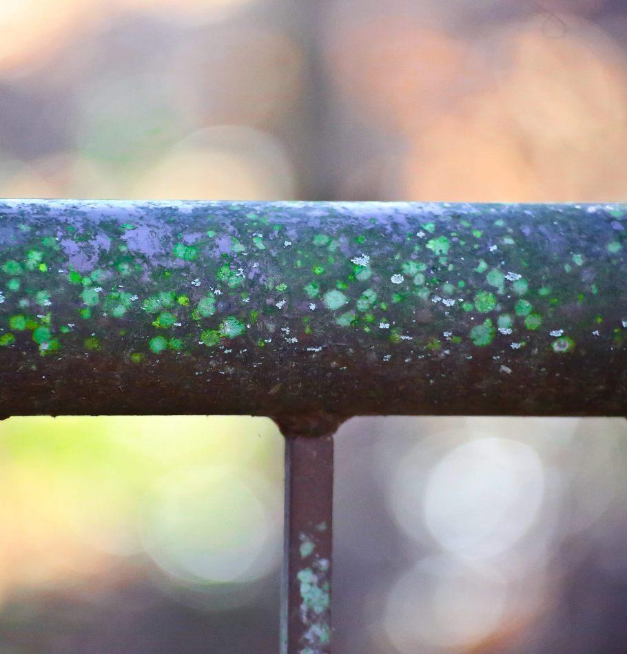 Pretty little moss bits on a handrail.