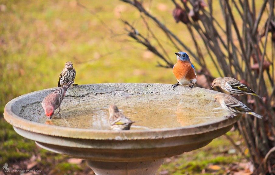 A few birds are enjoying the birdbath.