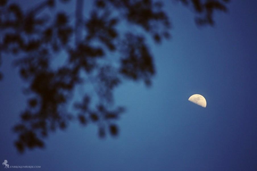 The moon is half risen.