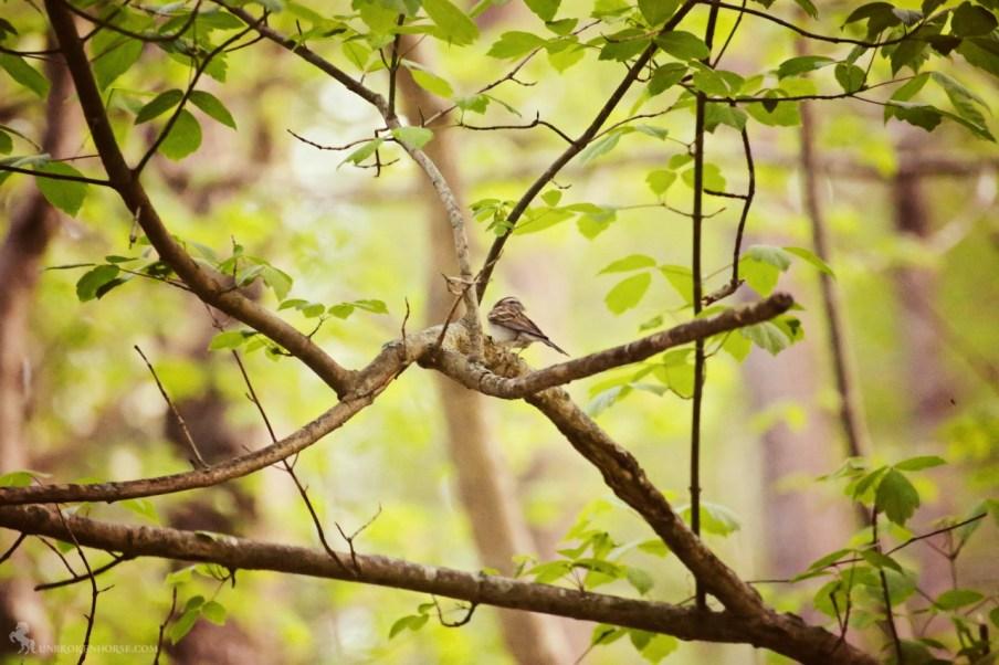 A sweet little finch.