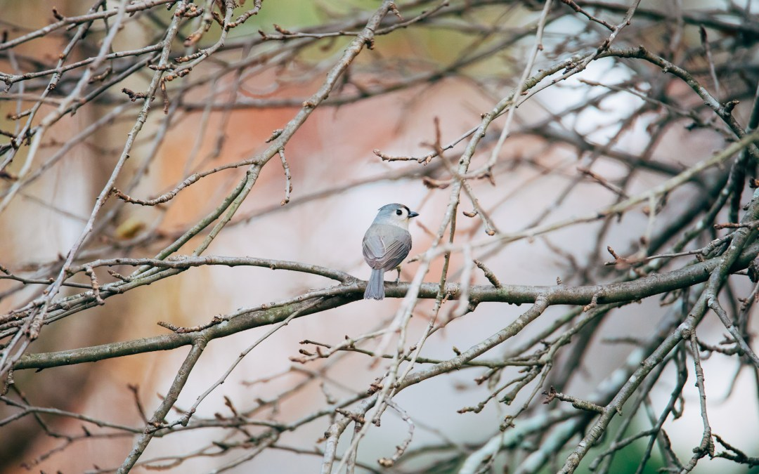 New Camera, More Birds
