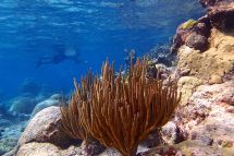 Site St. Croix Signs Of Coral Reef