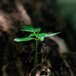 Uncompromising Faith The Fruit Tree Seedling 2