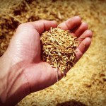 Read more about the article How to Produce Good Soil
