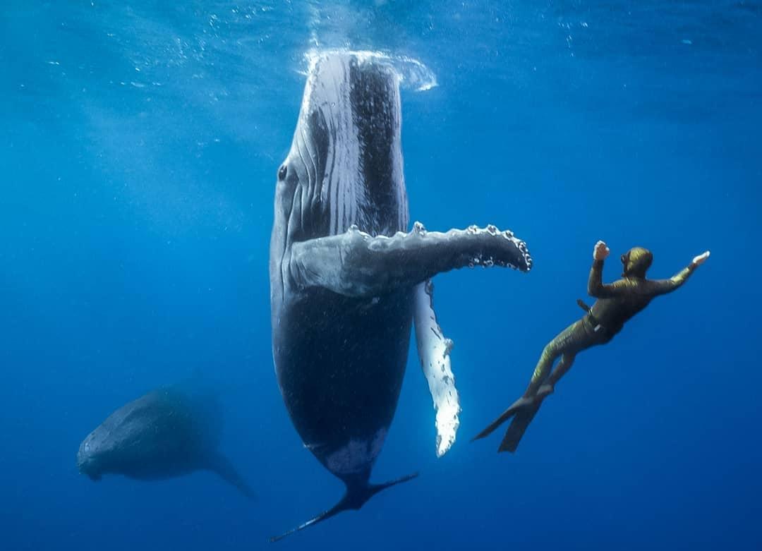 Ep262: Enjoying the Freefall Through Life, with Australian Freediving Record Holder, Adam Stern