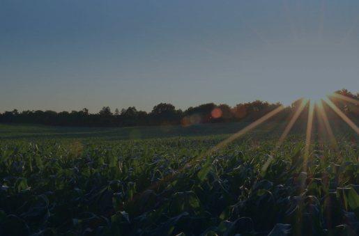 farmland2