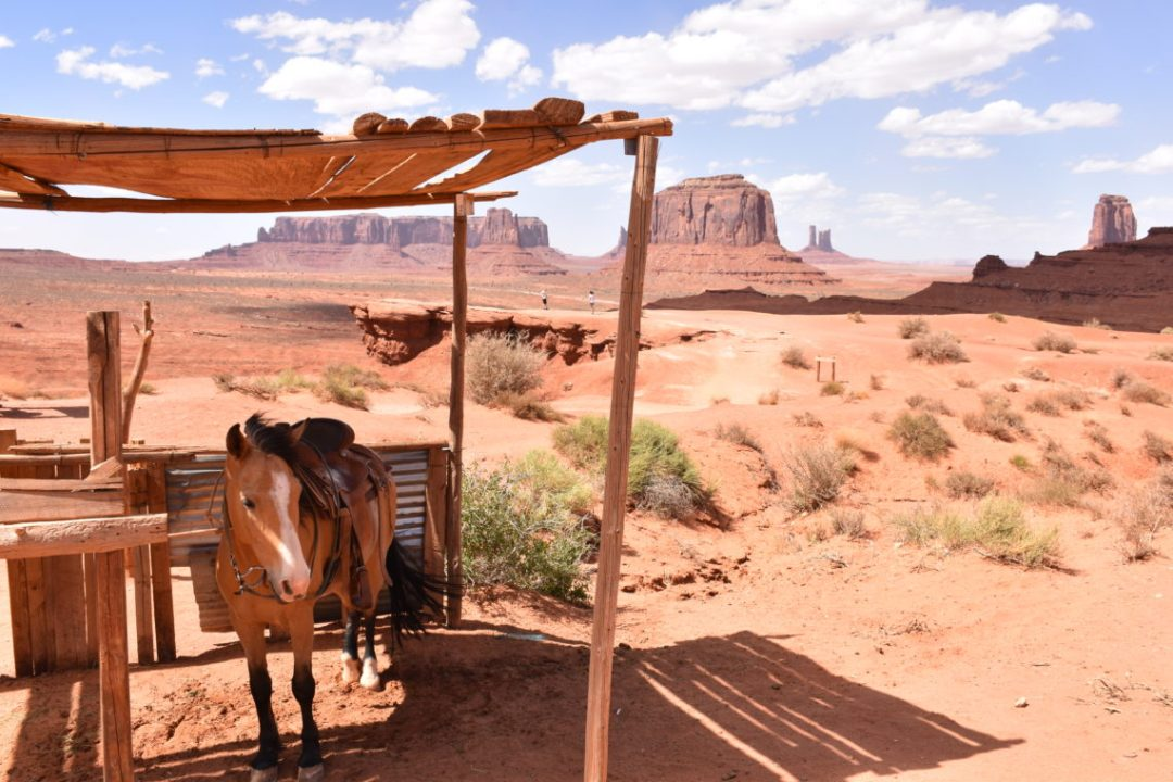 Monument Valley_Cheval_Horse