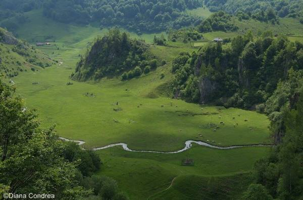 nature in romania wilderness