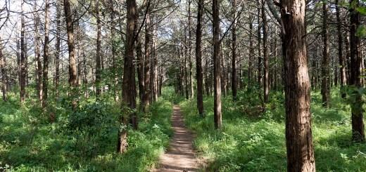 Parallel Forest photo by Dennis Spielman