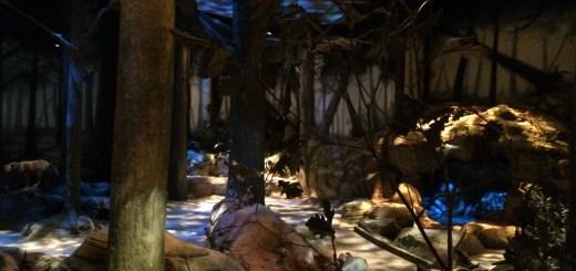 Inside the Spirit Forest.