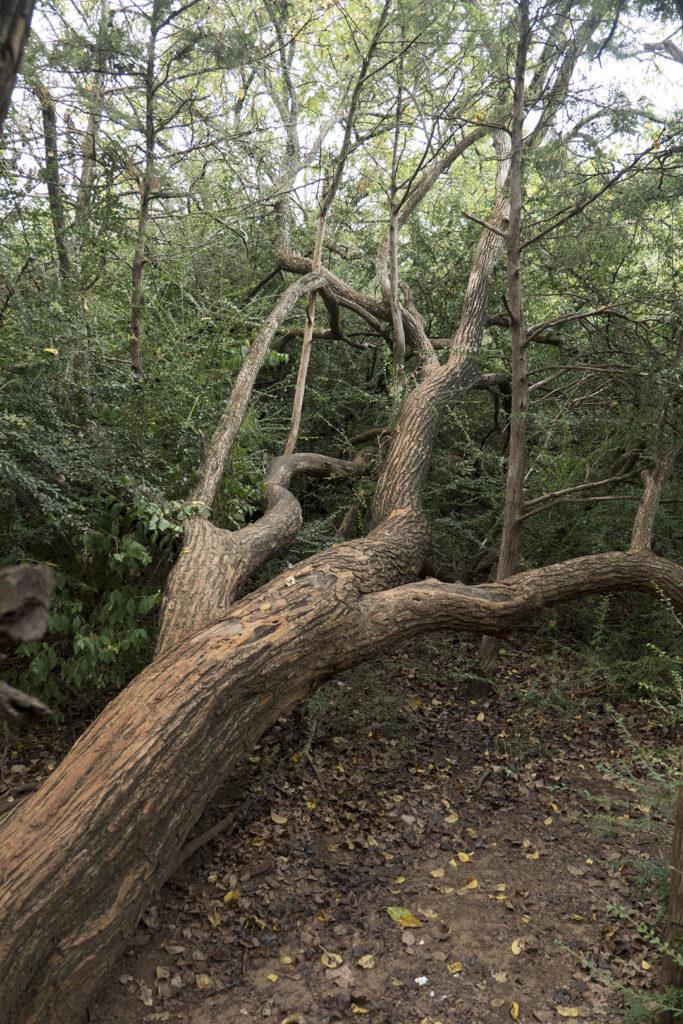 George M. Sutton Wilderness Park - photo by Dennis Spielman