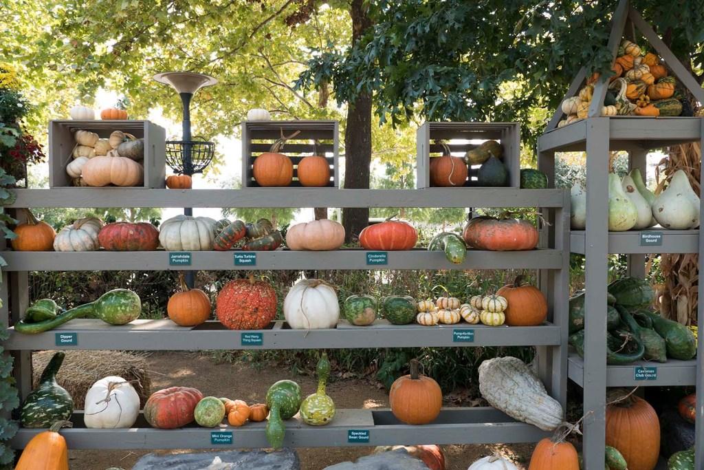 Display of Pumpkins at Pumpinville - photo by Dennis Spielman