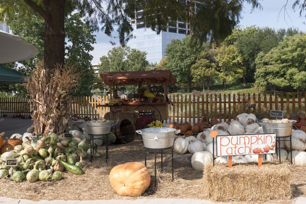 Pumpkins for Sale at Pumpkinville - photo by Dennis Spielman