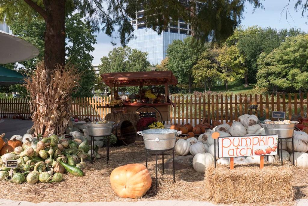 Pumpkins for Sale at Pumpkinville - photo by Dennis Spielman