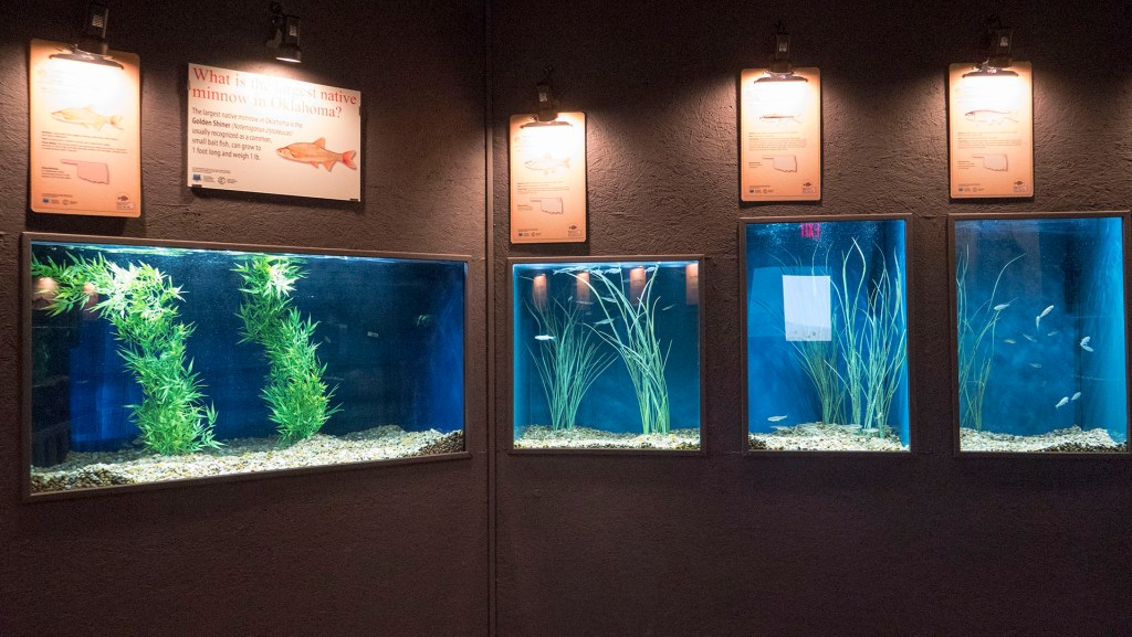 Medicine Park Aquarium - photo by Dennis Spielman