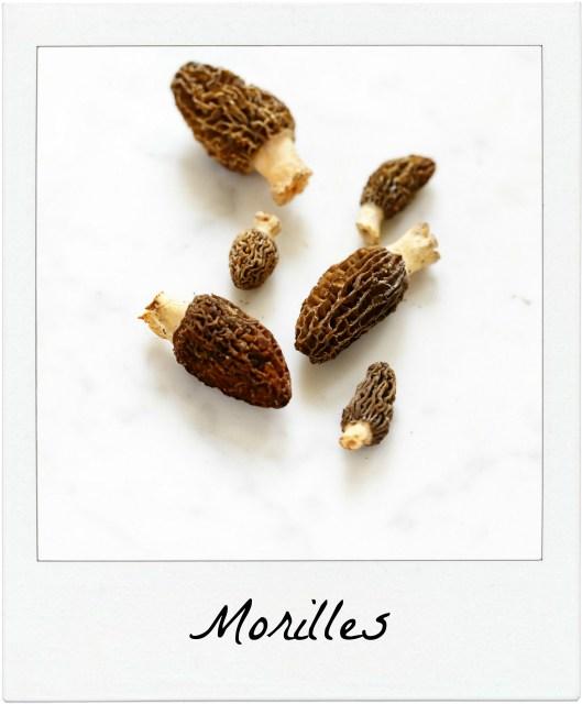 morille champignon printemps infos recettes