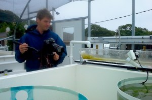 Daniel Cojanu filming the mesocosm