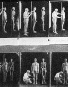 Anthropometry chart also race history eugenics and physical anthropology rh understandingrace