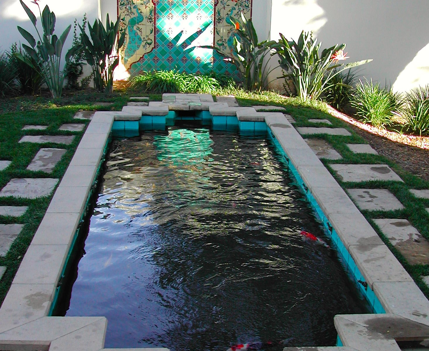 Professional koi pond construction and repair in pasadena for Koi pond maintenance service