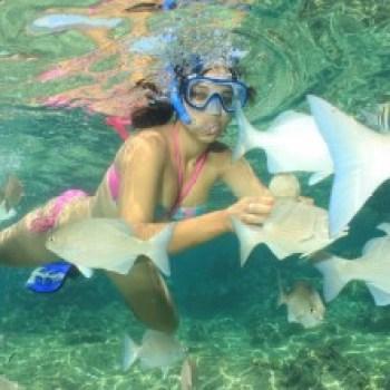 巴拉德罗古巴浮潜