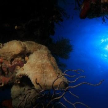 underwater pictures in Cuba