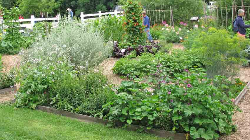 Easy Garden Ideas Terroir Seeds
