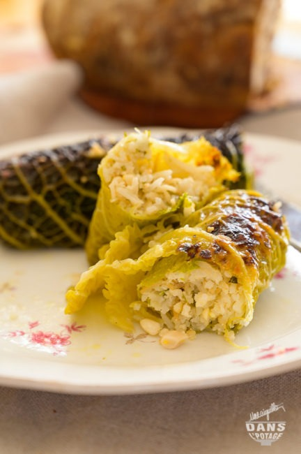 stuffed cabbage ottolenghi rice ricotta