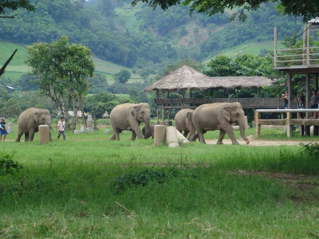Elephant Nature Park in Chiang Mai, Thailand | CCO Public Domain