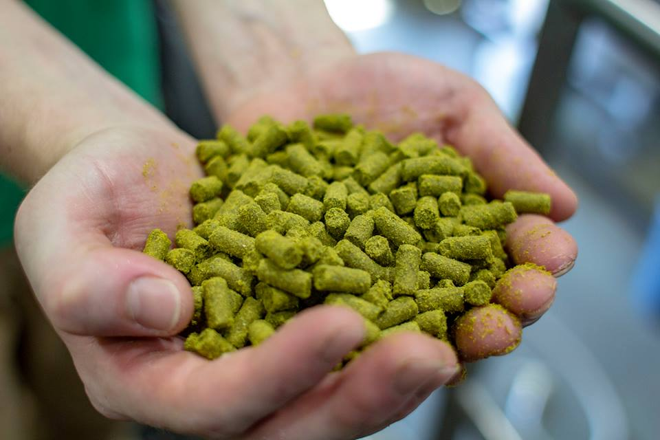 A woman holds a handful of hops | © Courtesy of The Pink Boots Society Facebook Page