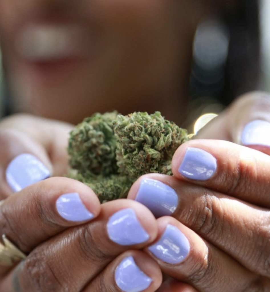 Hands offerig cannibus buds   SimplyPure_Facebook Page