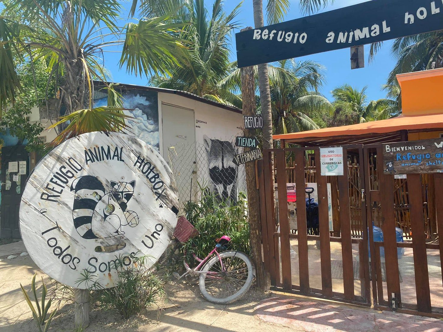 Volunteering at a Woman-Run Animal Shelter in Mexico